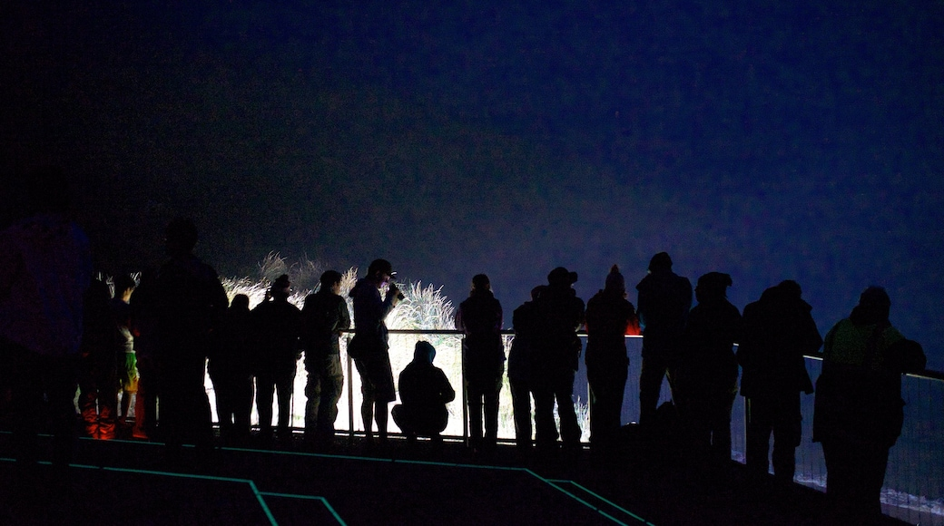 Royal Albatross Centre showing night scenes as well as a large group of people