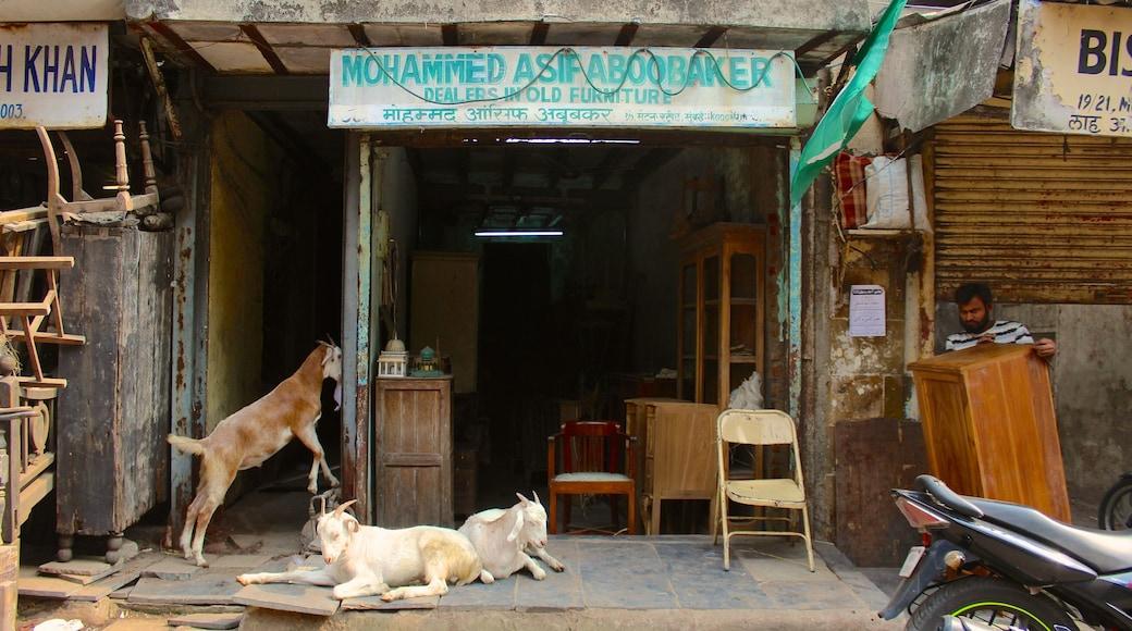 Chor Bazaar showing cuddly or friendly animals