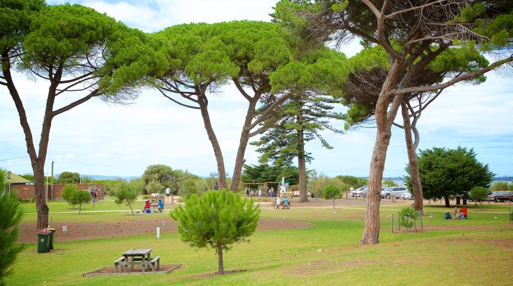 Queenscliff showing a park