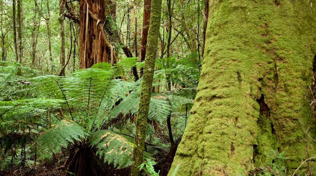 Great Otway National Park which includes rainforest