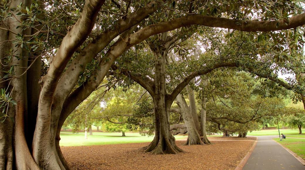 Fitzroy Gardens ofreciendo un parque