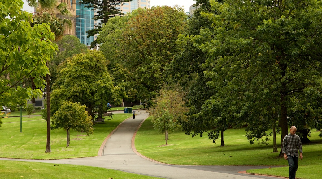 Fitzroy Gardens showing a garden