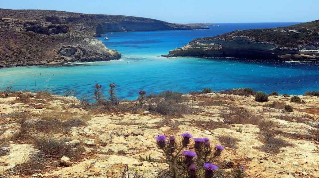Lampedusa featuring a gorge or canyon, general coastal views and rocky coastline