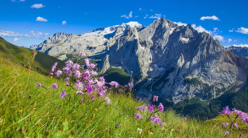 Canazei das einen Wildblumen, Landschaften und Berge
