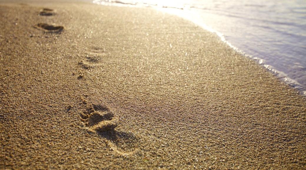 Le Morne showing a beach
