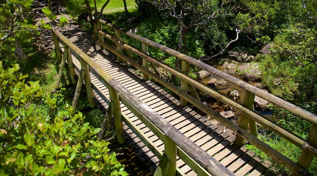 Parc national des Gorges de la Rivière Noire mettant en vedette rivière ou ruisseau