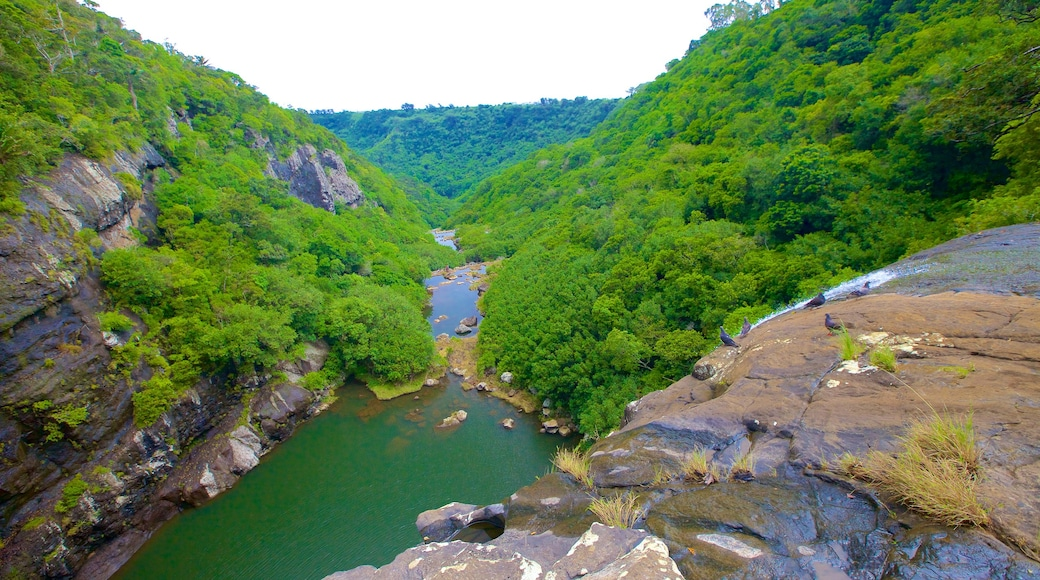 Tamarind Falls featuring a gorge or canyon and a lake or waterhole