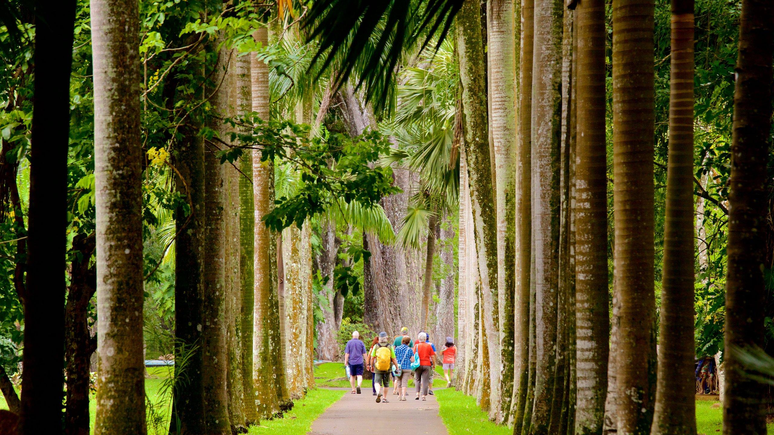 Pamplemousses, Mauritius