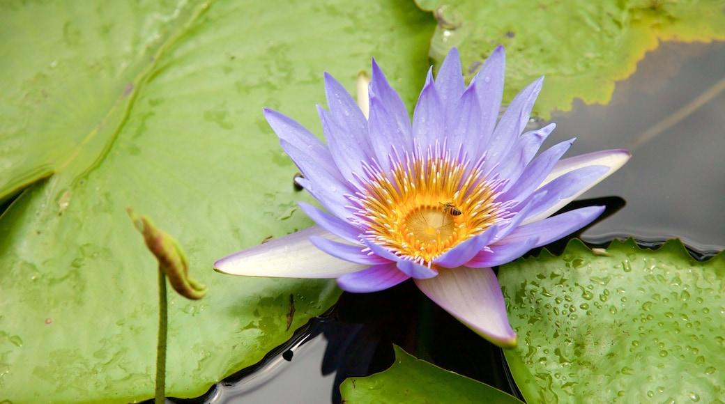 Botanischer Garten Pamplemousses welches beinhaltet Wildblumen