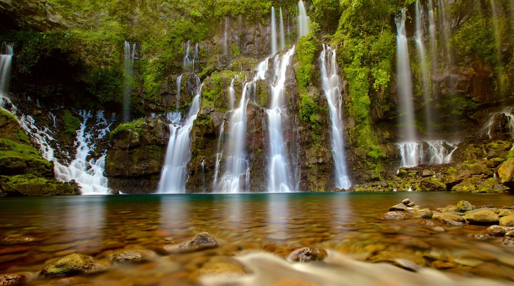 Reunion which includes rainforest, a waterfall and a lake or waterhole