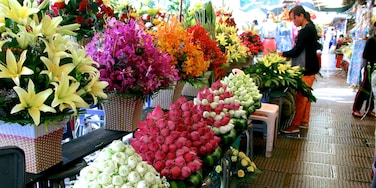 Central Market showing markets and flowers as well as an individual femail