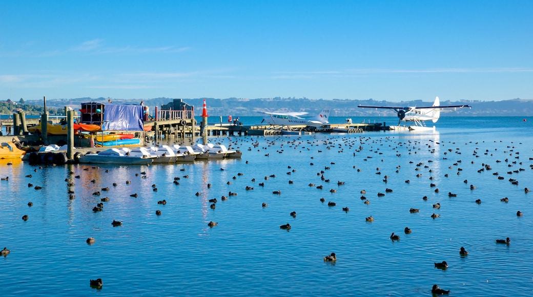 Lake Rotorua which includes bird life and a lake or waterhole