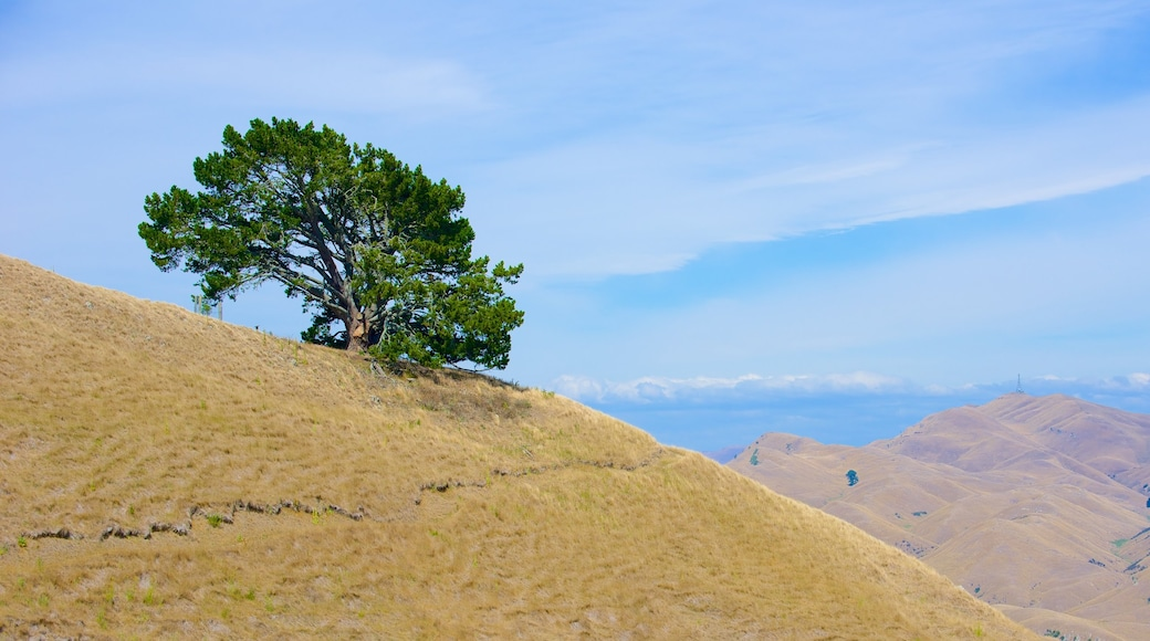Te Mata Peak showing tranquil scenes and landscape views