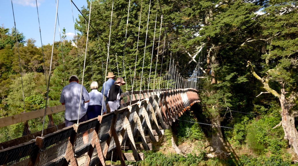 Turangi featuring a suspension bridge or treetop walkway and forest scenes as well as a small group of people