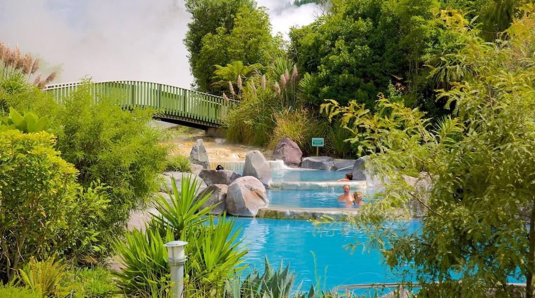 Wairakei showing a hot spring