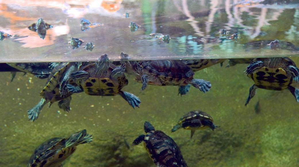 National Aquarium of New Zealand showing marine life