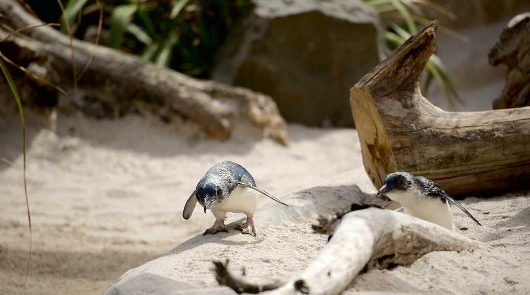 National Aquarium of New Zealand showing bird life and marine life