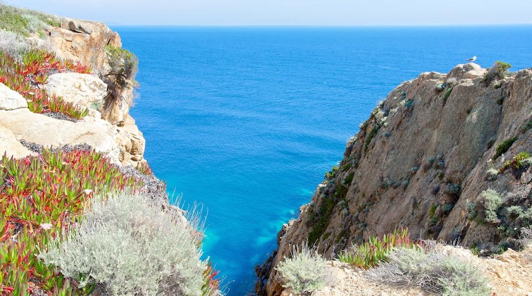 Isola del Giglio caratteristiche di vista della costa