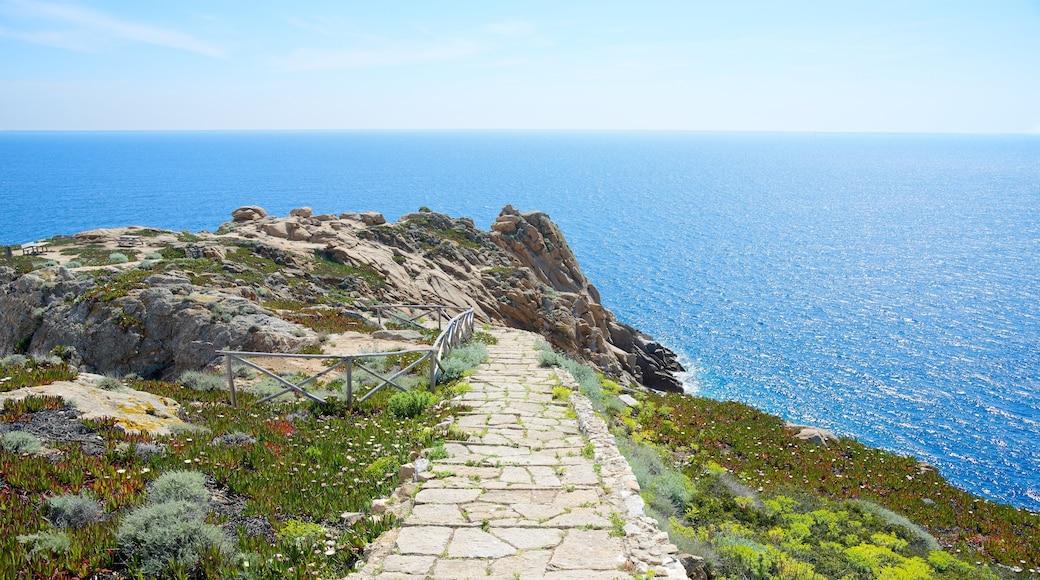 Isola del Giglio mostrando vista della costa