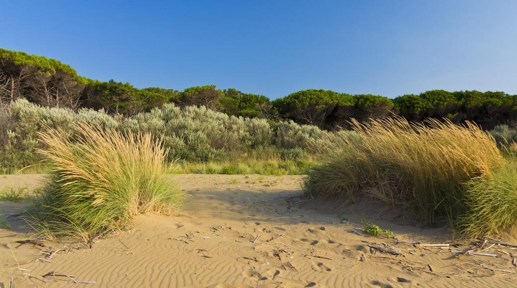 Bibione mostrando spiaggia e paesaggi rilassanti