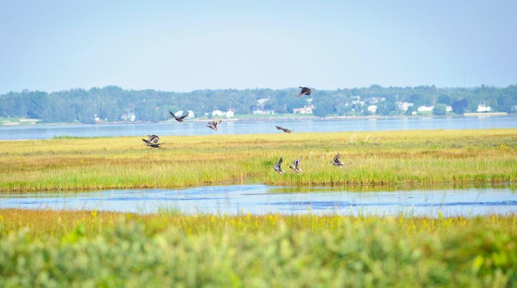 Bathurst showing bird life, wetlands and general coastal views