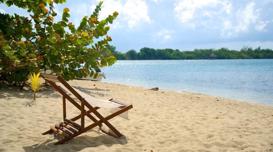 Playa de Placencia que incluye vistas generales de la costa y una playa de arena