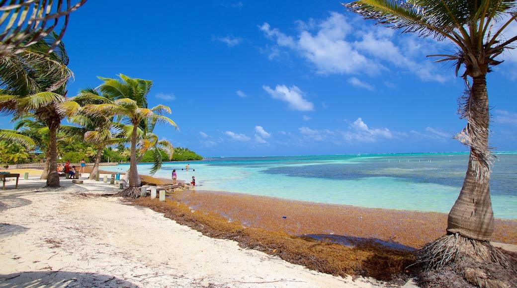 San Pedro featuring general coastal views and tropical scenes