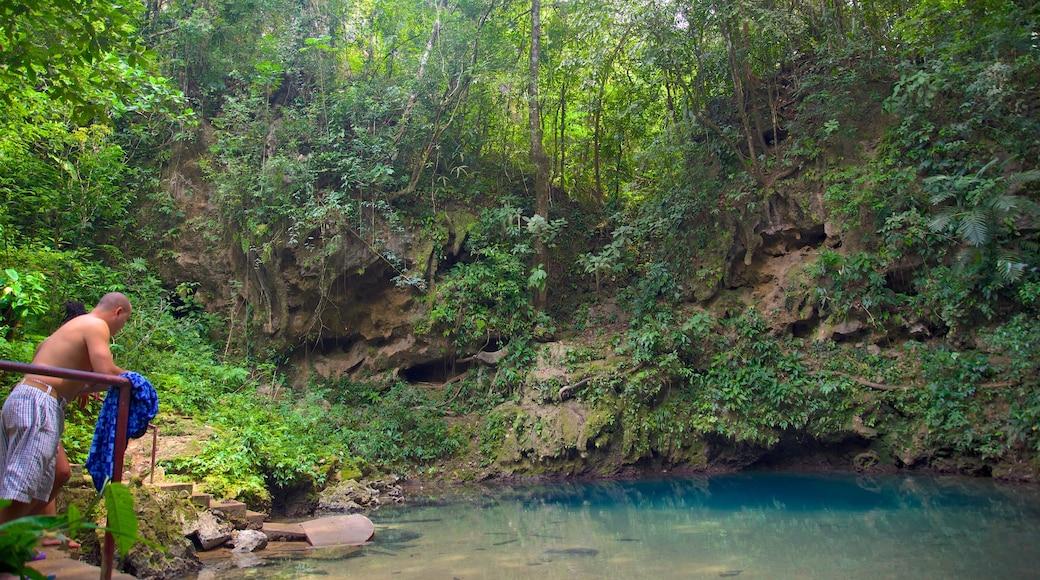 Parque Nacional Blue Hole que incluye un lago o abrevadero y selva y también un hombre