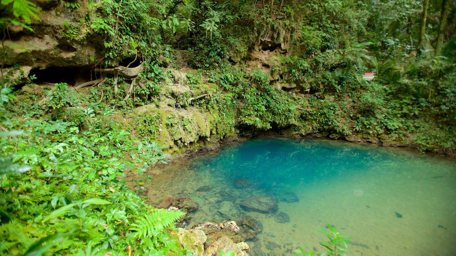 Blue Hole National Park featuring rainforest and a lake or waterhole