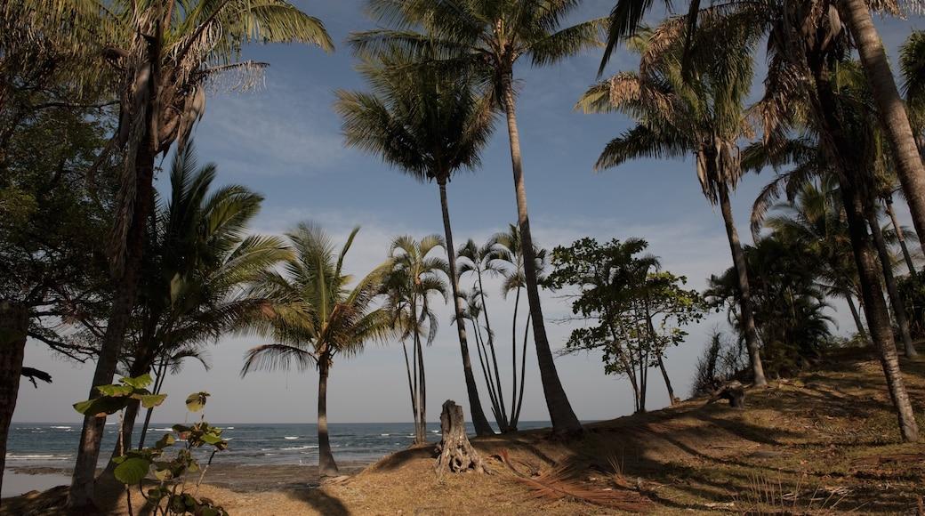 San Jose showing tropical scenes and general coastal views