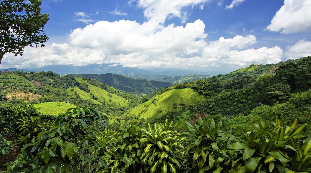 San Jose showing rainforest and tranquil scenes