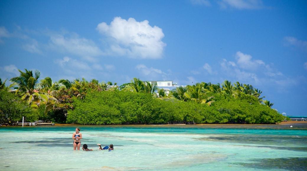 San Pedro welches beinhaltet Schwimmen, allgemeine Küstenansicht und tropische Szenerien