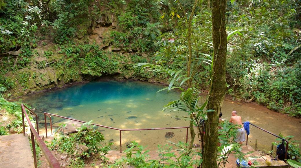 Parque Nacional Blue Hole mostrando un lago o abrevadero y selva