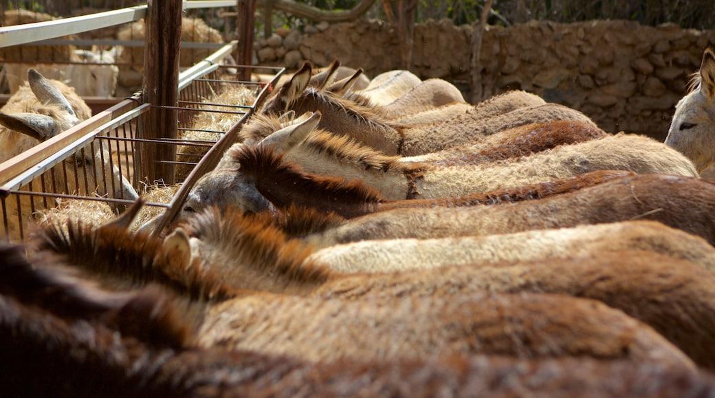 Santa Cruz featuring animals and zoo animals