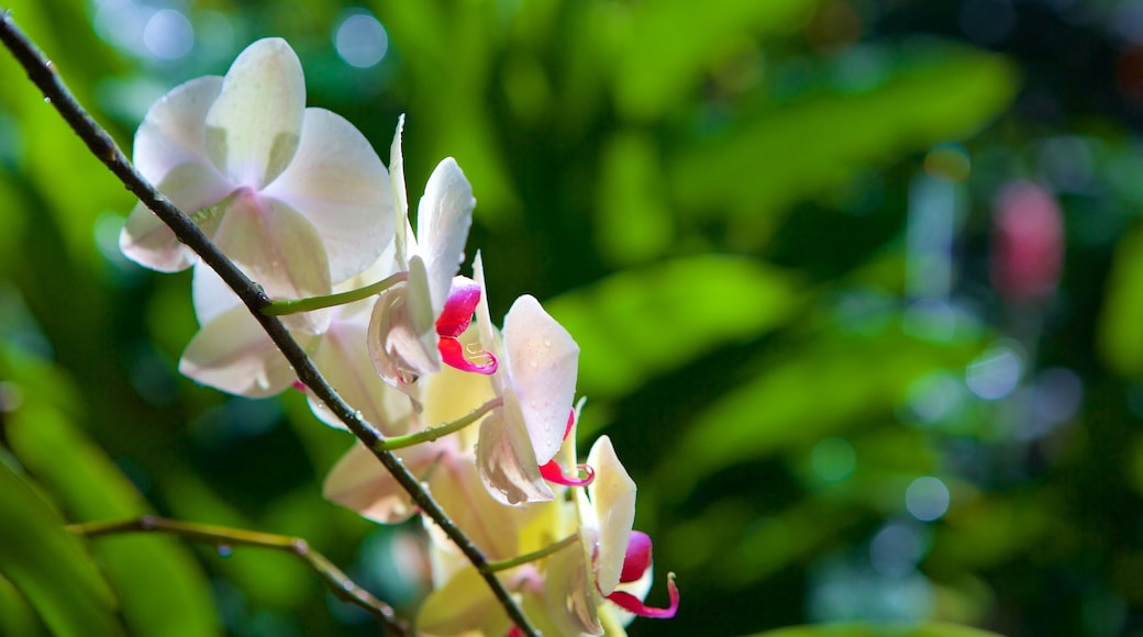 Butterfly Farm featuring flowers