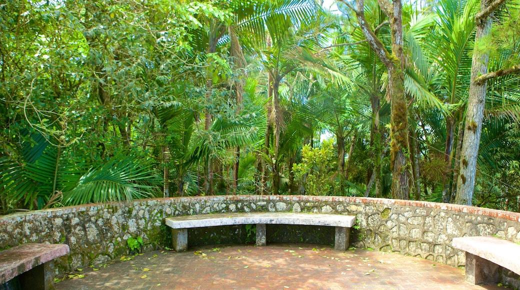 Pico Isabel de Torres showing rainforest