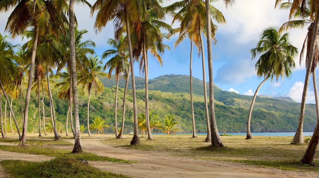 Playa Rincon mit einem tropische Szenerien und allgemeine Küstenansicht