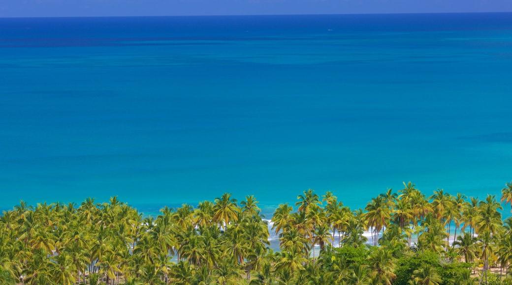 Las Terrenas showing general coastal views