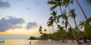 Bayahibe Beach featuring a beach, a sunset and tropical scenes
