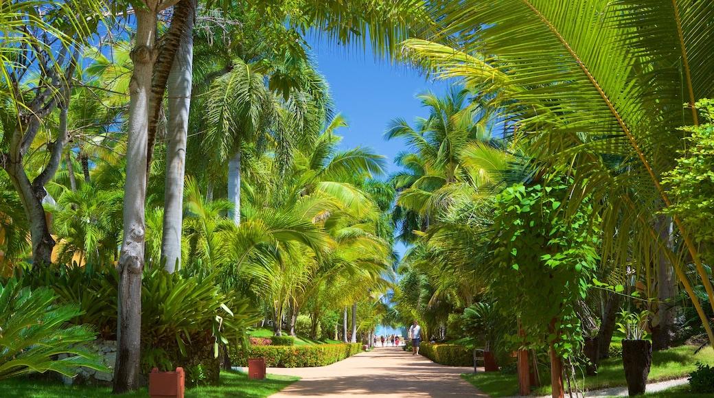 Arena Gorda Beach featuring a park