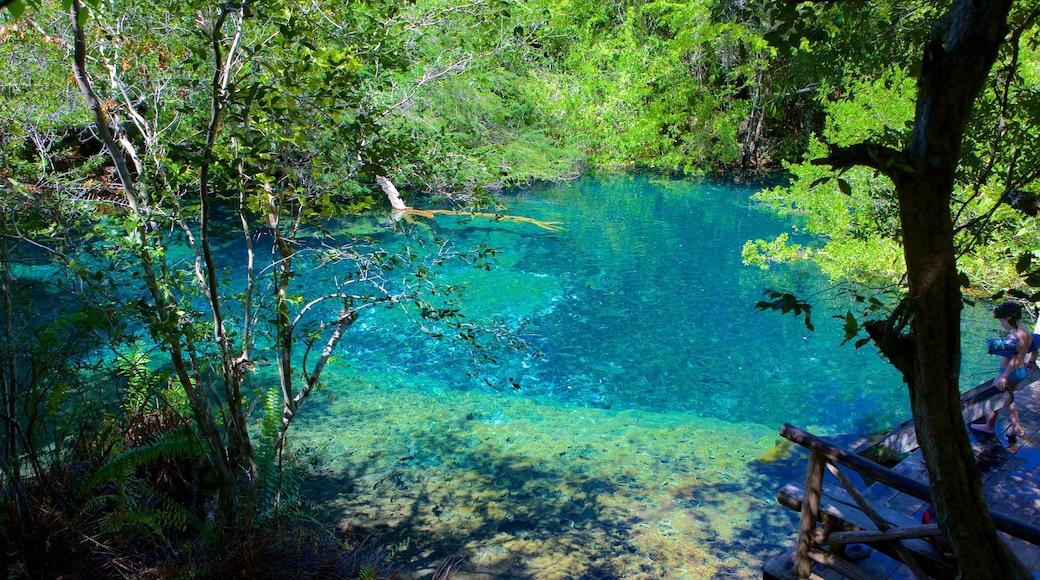 Indigenous Eyes Ecological Park che include lago o sorgente d\'acqua