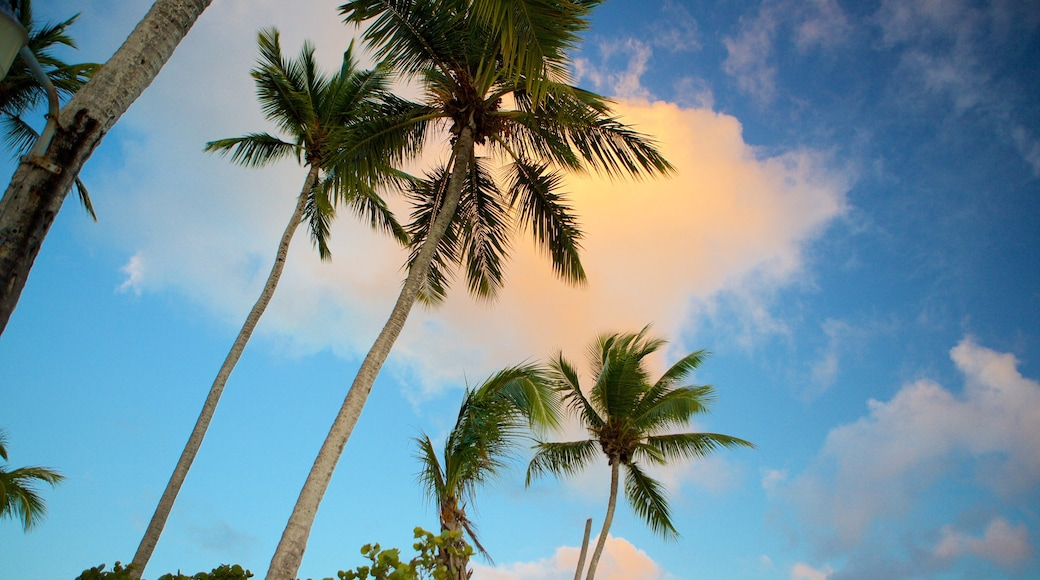 Bayahibe Beach featuring tropical scenes