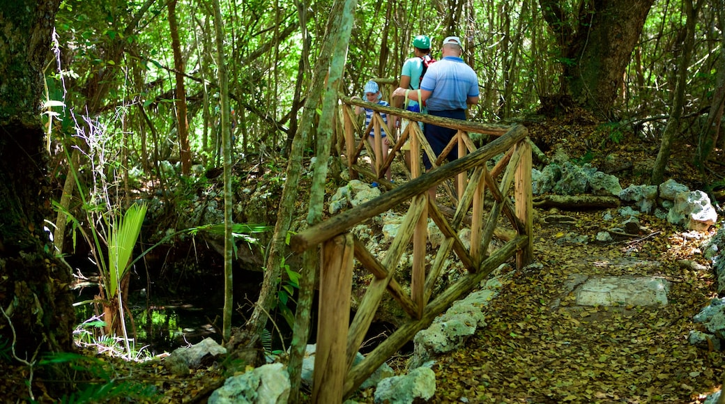 Indigenous Eyes Ecological Park which includes a park as well as a small group of people