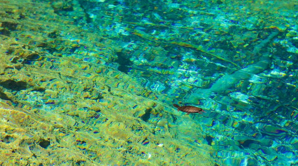 Indigenous Eyes Ecological Park showing a lake or waterhole