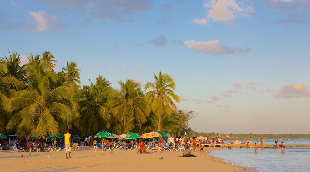 République dominicaine mettant en vedette plage de sable