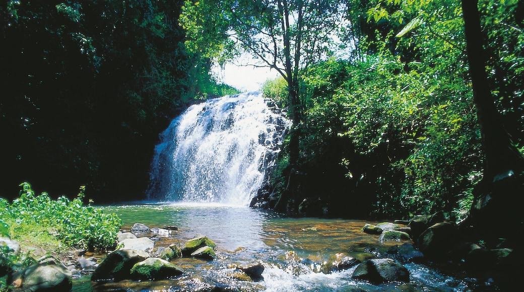 Atherton Tablelands showing a river or creek, forest scenes and a waterfall