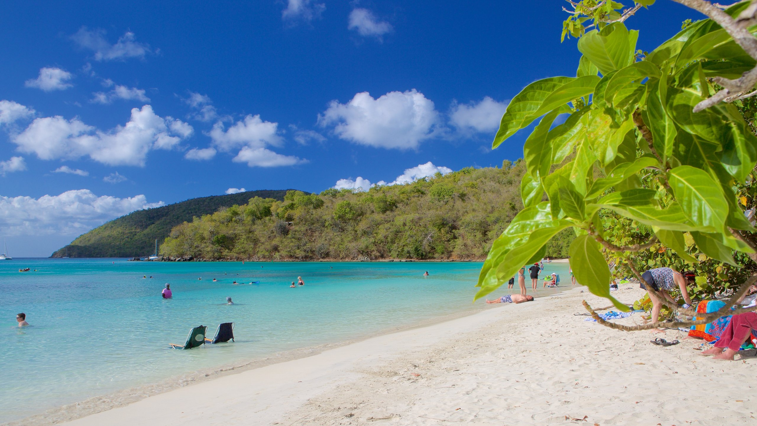 Not just an idyllic spot for swimmers and sunbathers, this picturesque bay is also popular with a raft of colorful marine creatures.