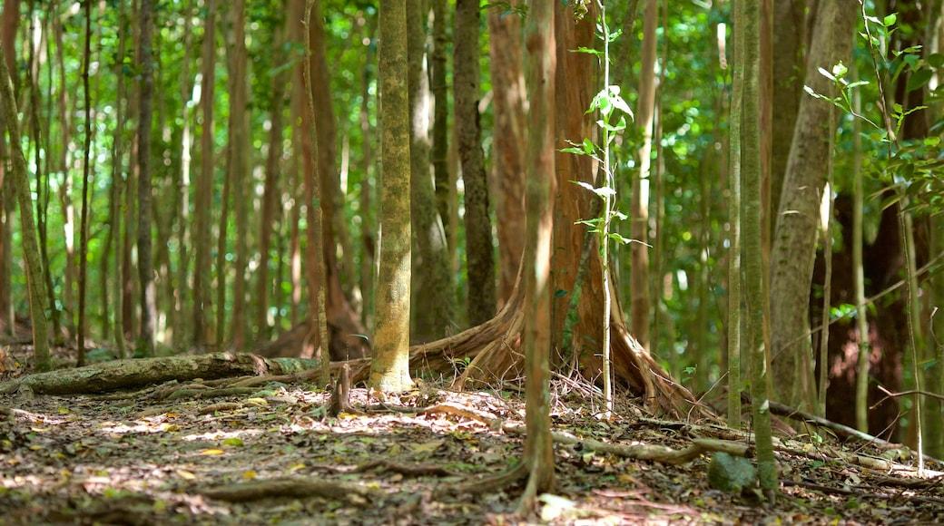 Cinnamon Bay featuring rainforest
