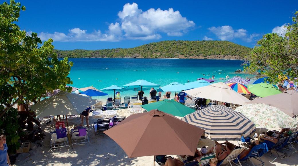 Coki Beach featuring a sandy beach and tropical scenes