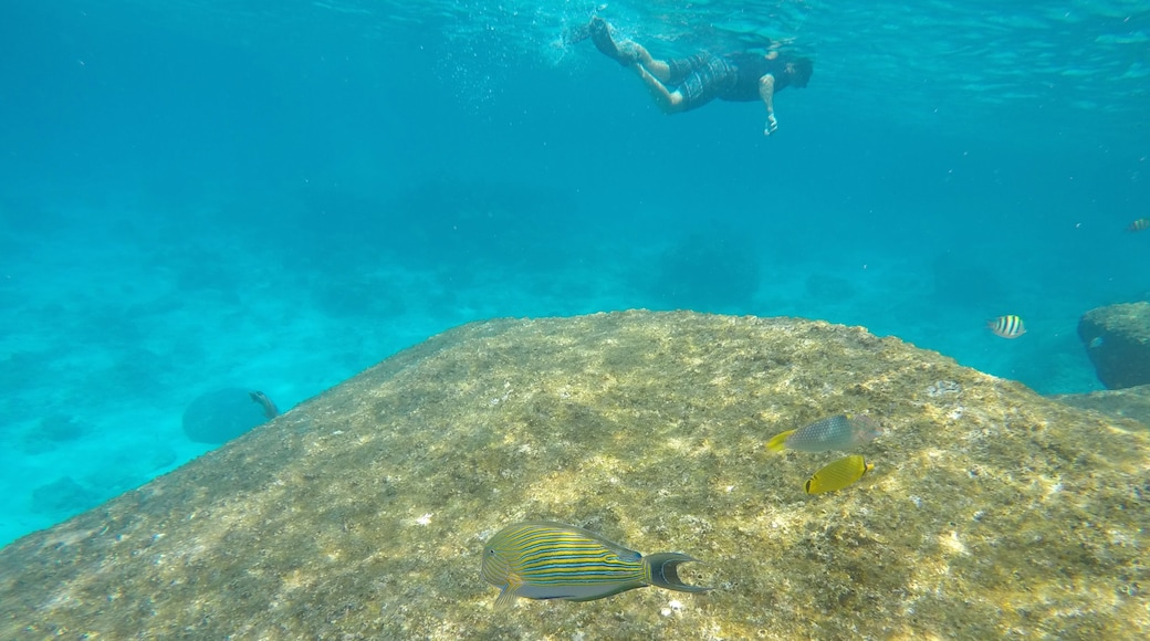 อุทยานแห่งชาติเกาะสิมิลัน แสดง ชีวิตทางทะเล และ สน็อกเกิ้ล